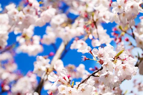spring wallpaper hd tumblr pretty flowers backgrounds wallpaper cave