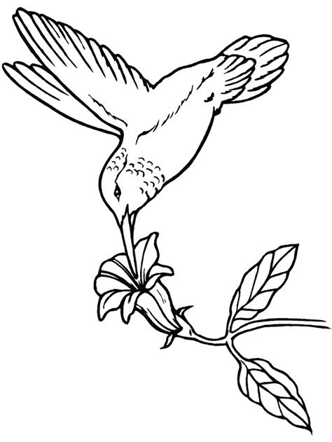 hummingbird coloring page hummingbird coloring page az coloring pages