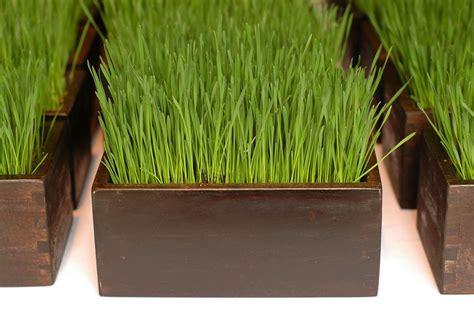 wheat grass centerpieces home spun style