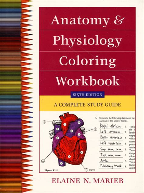 anatomy and physiology coloring workbook chapter 13 journey marieb anatomy physiology coloring workbook a complete