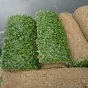 tappeto erboso prezzi il tappeto erboso tecniche di giardinaggio il tappeto