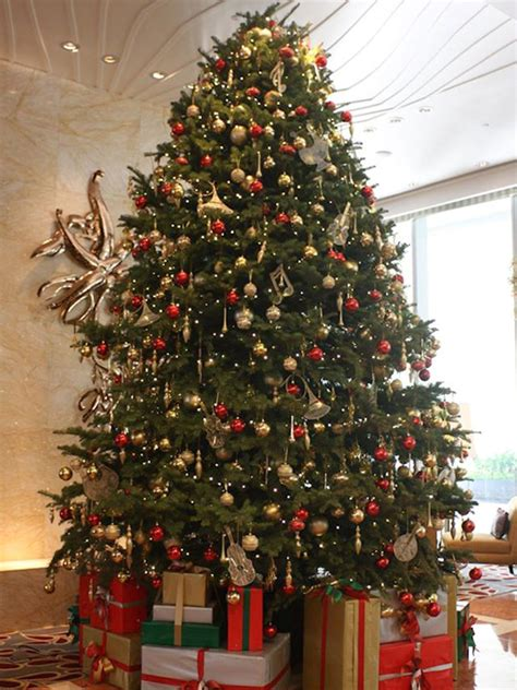real christmas trees near me best 28 where to buy trees near me tree lots near me best business