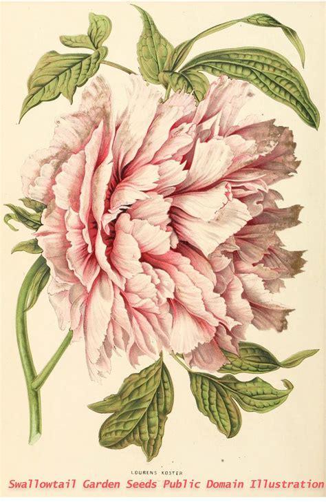 sketchbook ne demek 265 best botanical images on botanical
