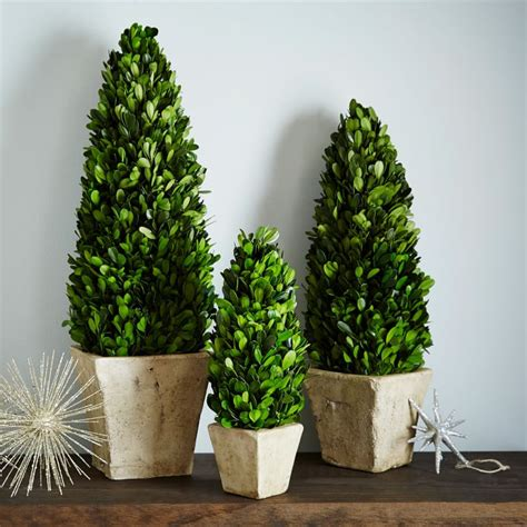 West Elm Tree - 17 tree alternatives for small spaces