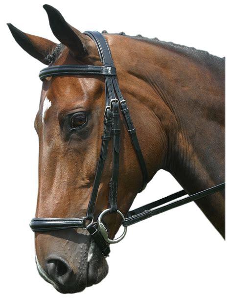 comfort bridles reviews sabre cordoba comfort bridle padded drop noseband bridle