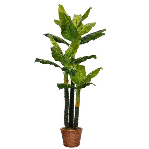 nearly sansevieria with black planter 4855 the