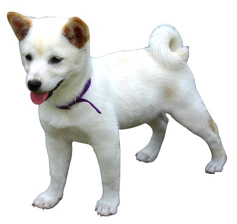 puppy png png image pngpix