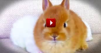 This is silly but i cant stop watching so many bunnies so much