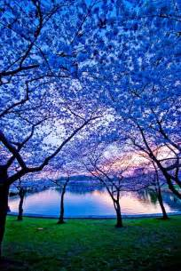 trees in bloom daily picks and flicks