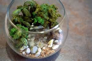 tropical rainforest terrarium diorama by evergreenterrariums
