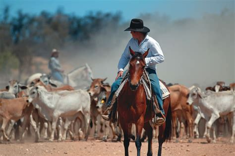 australian cattle cowboys outback snack mustering