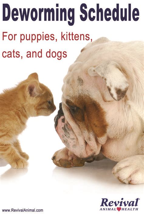 deworming medicine for puppies simple for deworming dogs cats puppies and kittens pet care tips