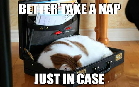 New Cat Memes