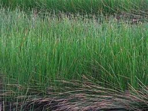 Tas Bulat Bahan Dari Rumput Mendong kerajinan mendong portal pemerintah kabupaten malang