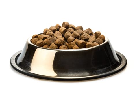 what to feed yorkie puppies best food for yorkies