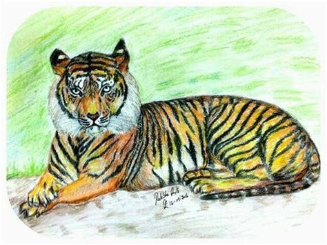 tiger colors tiger colour sketch www pixshark images galleries