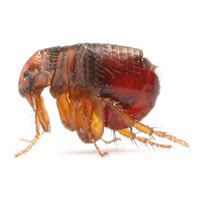flea control backyard pest control miami by the exterminators at one two tree inc