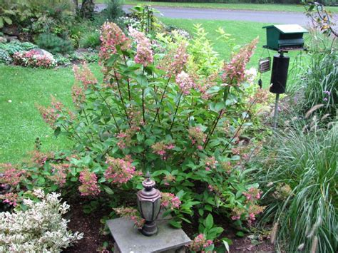 amazing color for the fall landscape landscaping ideas amazing color in the autumn garden newstimes