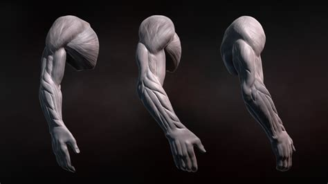 zbrush tutorial view zbrush tutorials gt sculpting human arms in zbrush tutorial