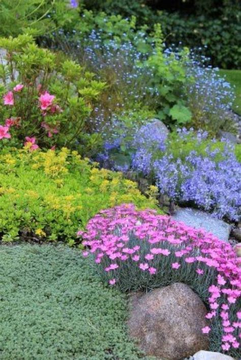 beautiful rock garden plants pink dianthus purple canula basket of gold aurinia saxatilis