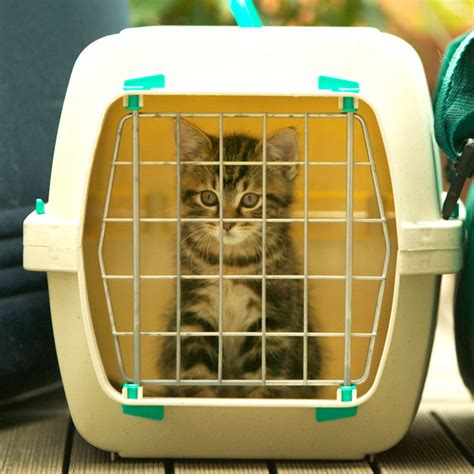 the 10 best cat carriers on 2018