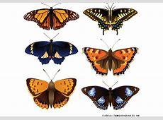 Vector butterfly - Download Free Vector Art, Stock ... Free Clipart Downloads Butterflies