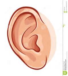 human ear stock vector image 44307529