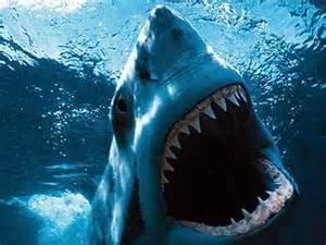 The world s biggest beasts bizarre stuff photos news
