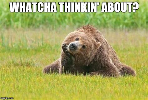 Whatcha Thinkin About Meme - image tagged in bear thinking imgflip