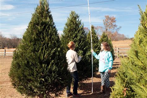 once plentiful few christmas tree farms remain in alabama