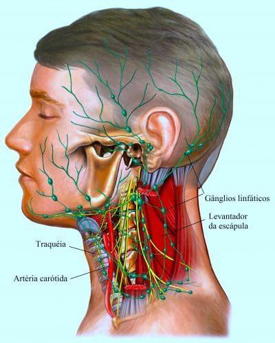 gengiva interna gonfia linfonodos do pesco 231 o inchados e reativos
