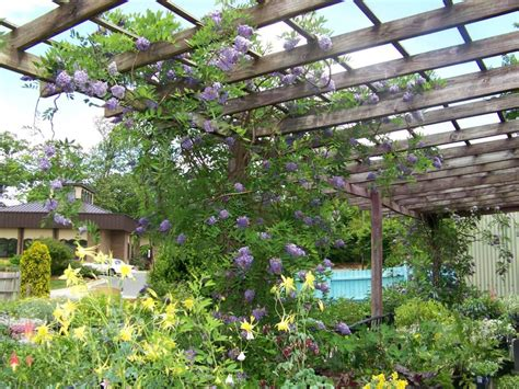 backyard vines wooden pergola contractor