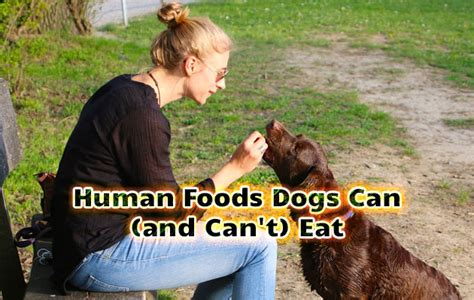 foods dogs cant human foods dogs can and can t eat did you pets
