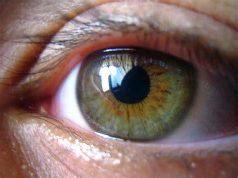imagenes ojos pardos 161 esto es lo que no sab 237 as de las personas con ojos pardos