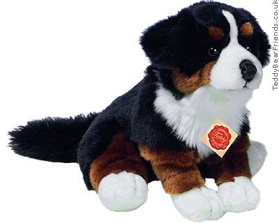 bernese mountain puppies price bernese mountain puppy teddy hermann teddy friends