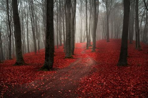 Naura Maroon photo collection forest fog road