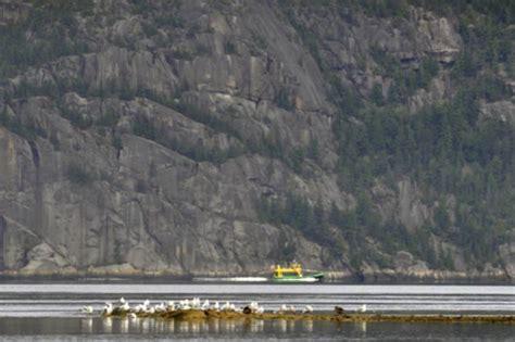 bateau mouche fjord navettes maritimes du fjord boat tour companies saguenay