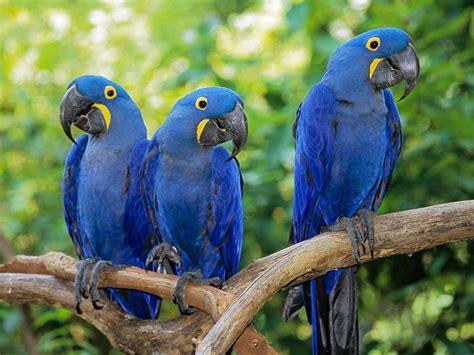 papoušci 1 ara milovnice všeho druhu hryprodivky cz