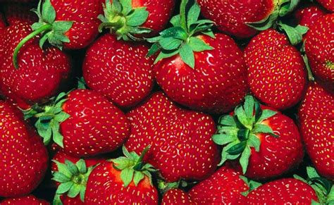 Pembersih Buah Dan Sayur Dari Bahaya Pestisida baguseven 10 sayur dan buah yang rawan pestisida
