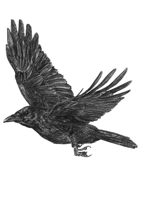 flying crow png cliparts co
