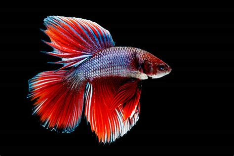 pictures of colorful fish free colorful fish images pictures and royalty free