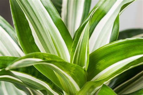 cascading indoor plants 17 best images about indoor gardening on pinterest