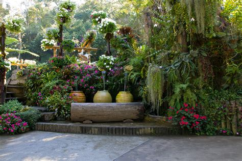backyard gardens how to care for flowers sacramento landscape