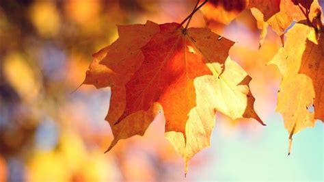 62 wallpaper autumn macbook air free retina macbook pro wallpapers