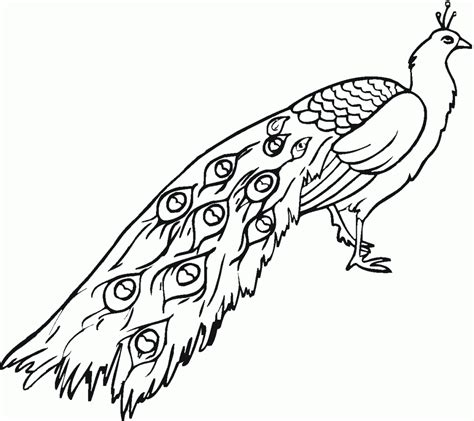 coloring book pages for print free printable peacock coloring pages for