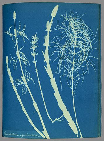 alternative photography (1) – cyanotype | photography and