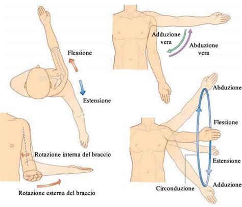 dolore interno spalla spalla