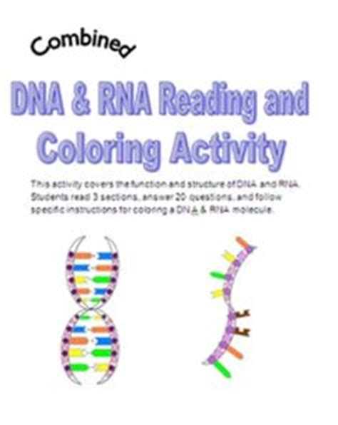 Dna The Helix Coloring Worksheet Answers by 1000 Images About Dna Rna On Dna Rna