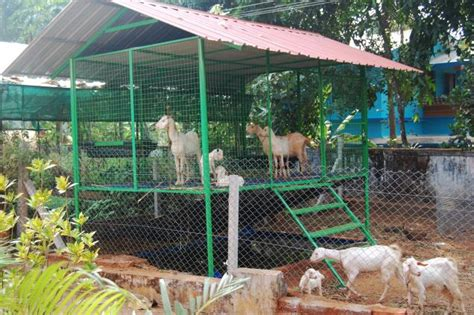 Low Cost Goat Shed by Tifany How To Build Goat Shed