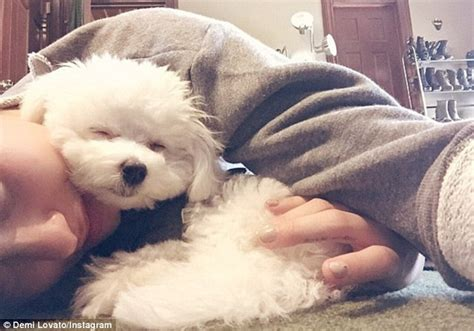demi lovatos dogs tragic death new details about what demi lovato pays instagram tribute to her pup who died in